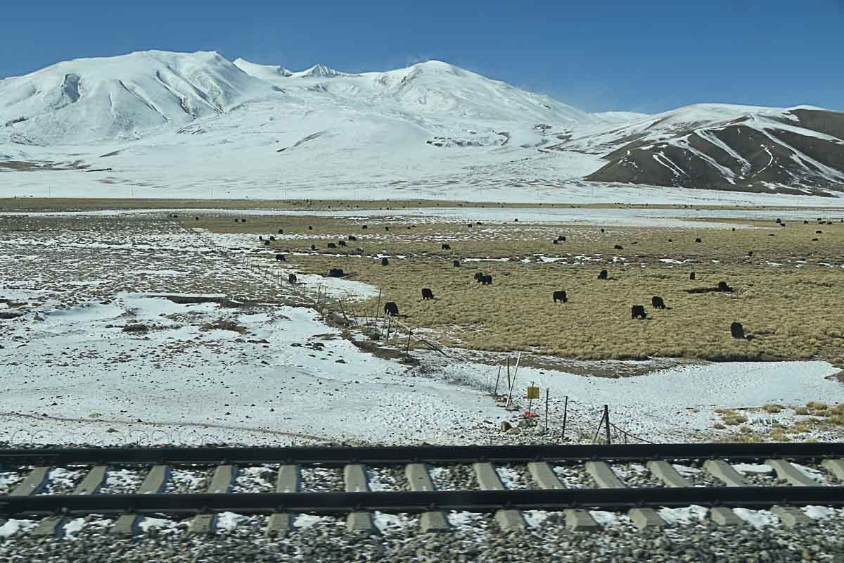 Xining to Lhasa Train