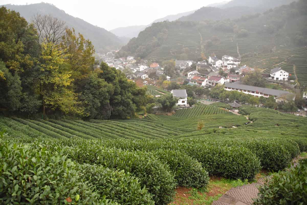 Longjing Tea Village